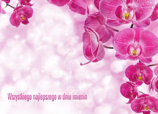 Kwiaty Na Imieniny Kartki Imieninowe Alekartkipl